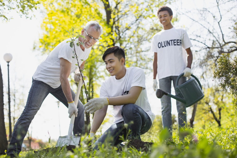 non-profit and volunteering industry
